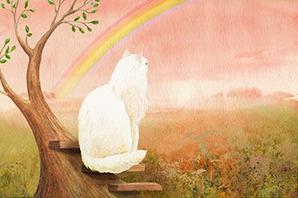 猫の絵本-虹の橋-ペットロス