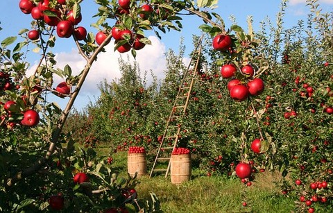 apple-1873078__340