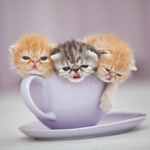 cat_7-jpg-e1409995497187