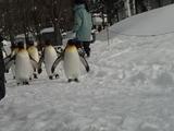 ペンギン�