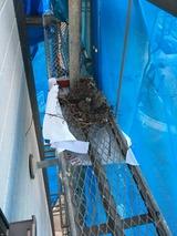 番外_鳥の巣