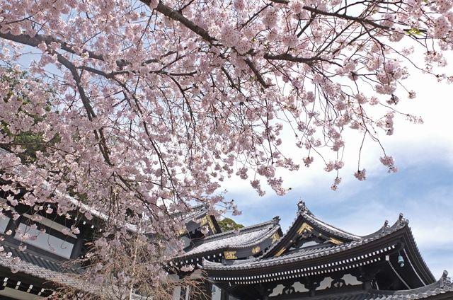 藍川京」の部屋 : 鎌倉 春たけな...