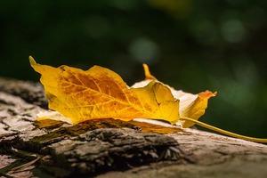 autumn-1705907_640