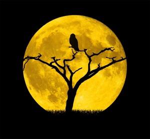 moon-3385829_640
