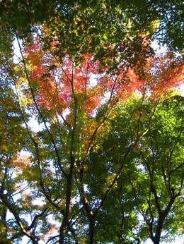 等々力渓谷紅葉�