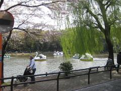 石神井公園桜�