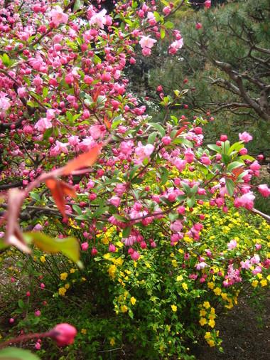 新宿御苑カンザン