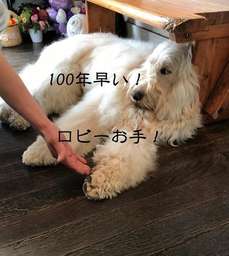 1IMG_4268