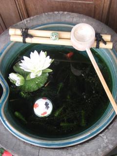 丁子屋金魚