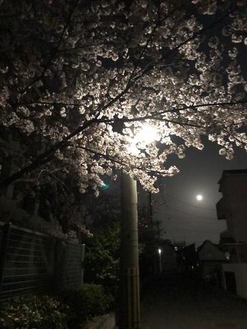 スーパームーンと桜18