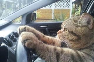 Cat-Driver
