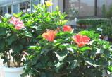 ローズガーデン生花