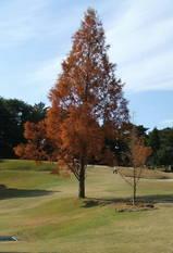 冬を耐えた木々ほど緑鮮やかな葉をつける