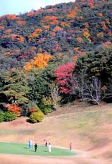 09・11 兵庫県レディースゴルフ大会 紅葉