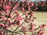 梅にウグイ、松に鶴。八尾の朝吉に清二でんがな!