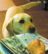 新聞を取ってく来た介助犬