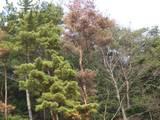 枯れ木がかわいそう・・・