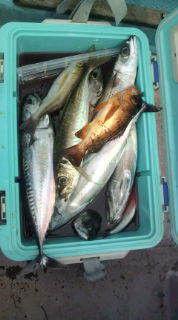 釣りは何でも楽しい!vol2-20130728134208.jpg