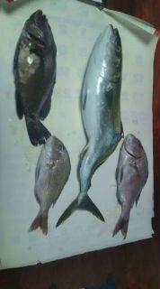 釣りは何でも楽しい!vol2-20101011212005.jpg