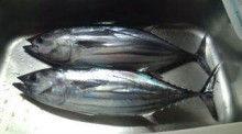 釣りは何でも楽しい!vol2-20120922163946.jpg