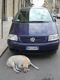 La macchina con il cane