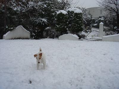 SPUMO雪1