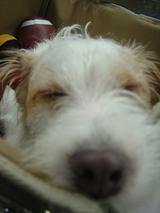 スプーモ寝顔アップ