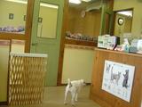 トムズ動物病院