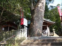 諏訪神社02