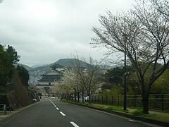 桜0318・03-3
