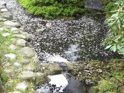 小ヶ倉水園02-4