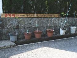 鍋島邸03