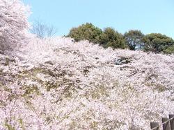 琴海中央公園02-3