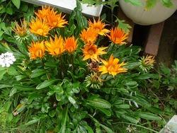 庭の花01-7