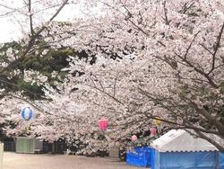 鹿尾川公園01-5
