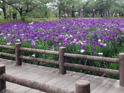 大村公園01-7