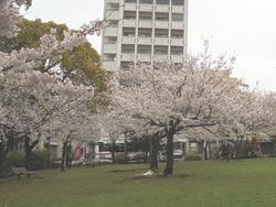 桜町公園01-2