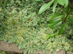 庭の花03-6