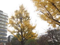 中町公園01
