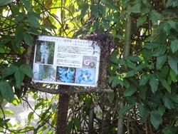 亜熱帯植物園03-3