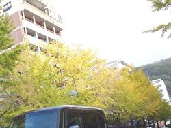 イチョウ並木01-2