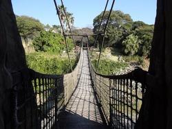 亜熱帯植物園04