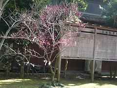松森神社03