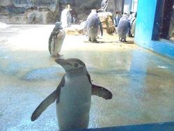 ペンギン水族館02-5
