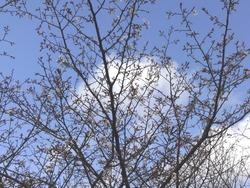 桜04-2