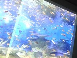 ペンギン水族館03-6