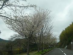 桜0318・03-4