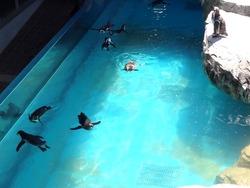ペンギン水族館04