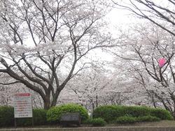 中尾城公園02