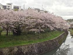 鹿尾川公園01